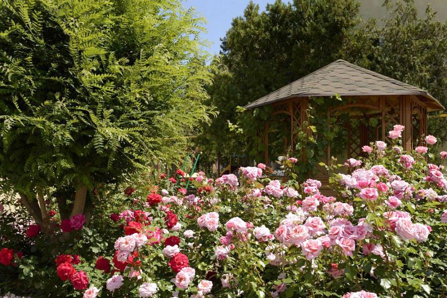 Цветник на территории пансионата Агата