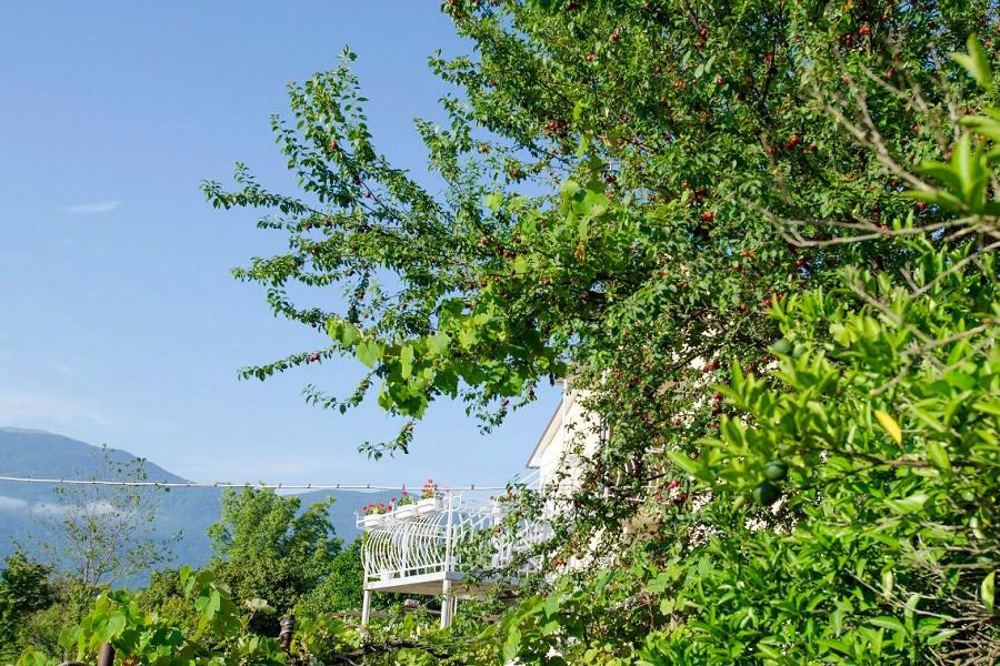 Сад на территории мини-отеля Аскар