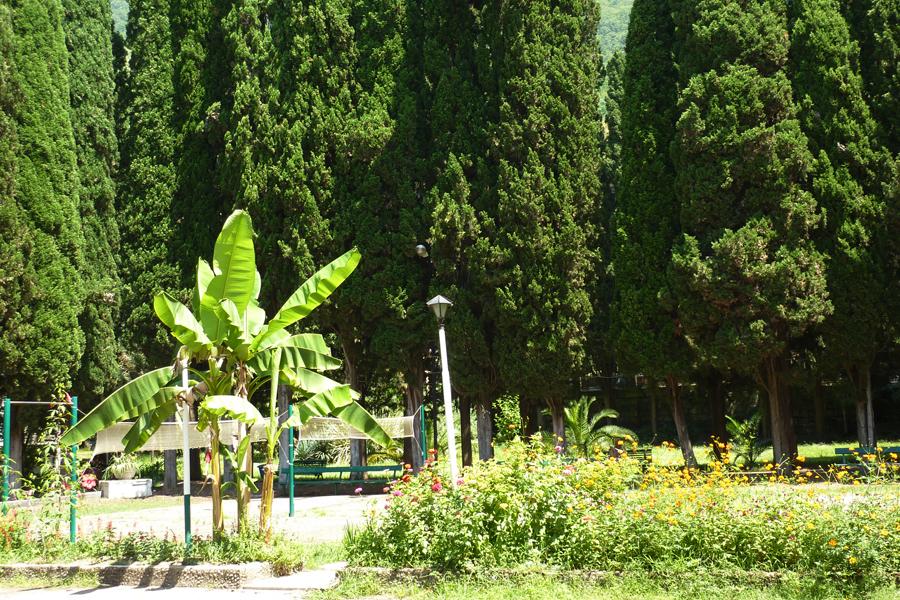 Территория санатория им. Челюскинцев, Гагра, Абхазия