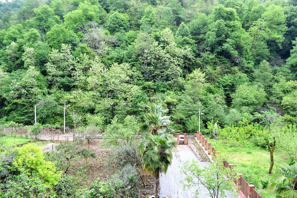 Лес напротив отеля ДжаНат, Сухум, Абхазия