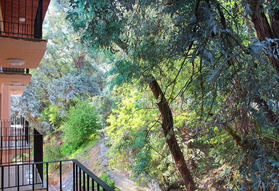 Вид на территорию с балкона номера в Новом корпусе пансионата Эвкалиптовая роща, Кындыг, Очамчыра, Абхазия