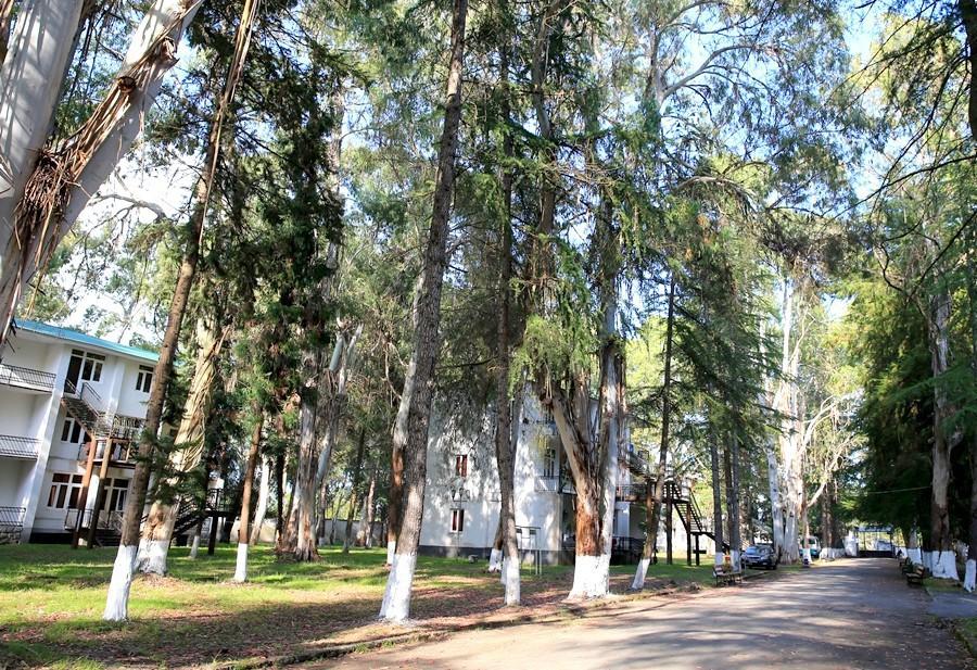 Пансионат Эвкалиптовая роща, Абхазия, Кындыг