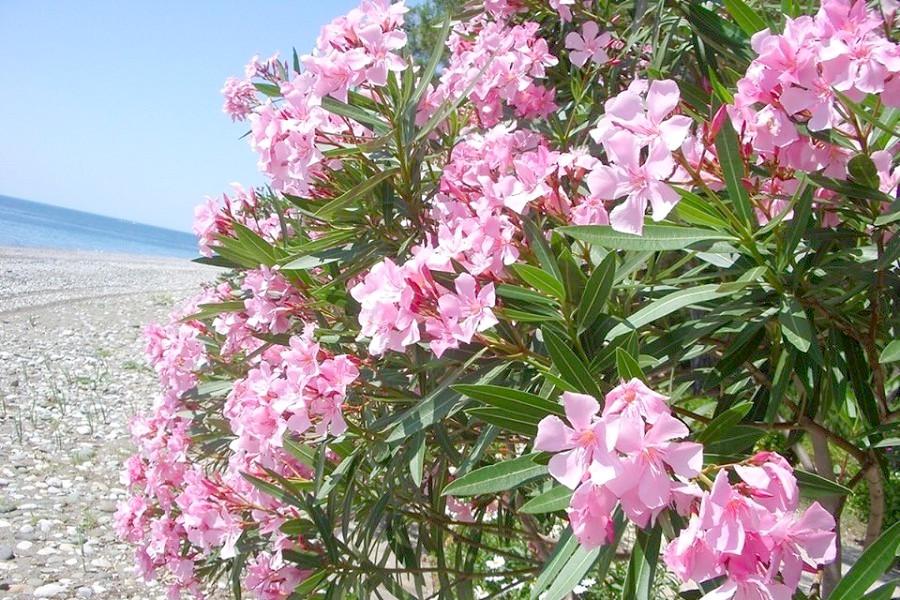 Пляж в Лдзаа, Абхазия