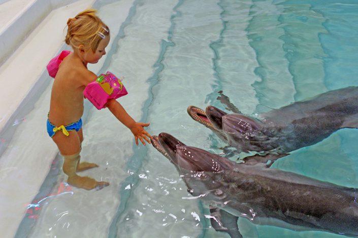 Дельфинотерапия в дельфинарии Морская звезда, Сочи, Лазаревское
