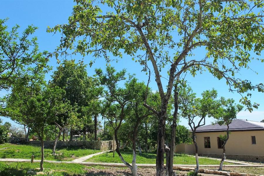 Сад на территории отеля Парадайз