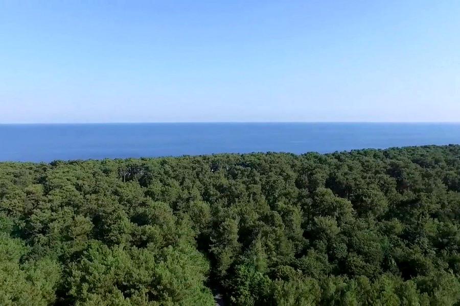 Дорога к морю от отеля Шармат, Пицунда, Лдзаа