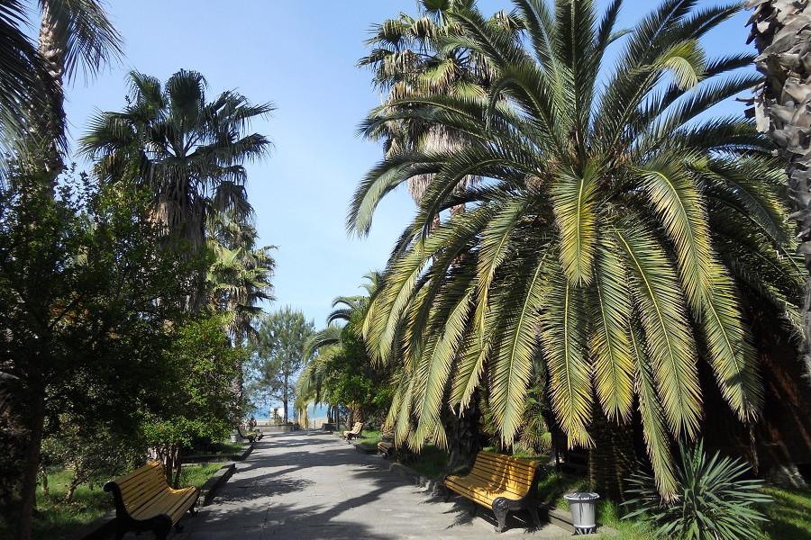 Дорога к пляжу пансионата Сосновая роща