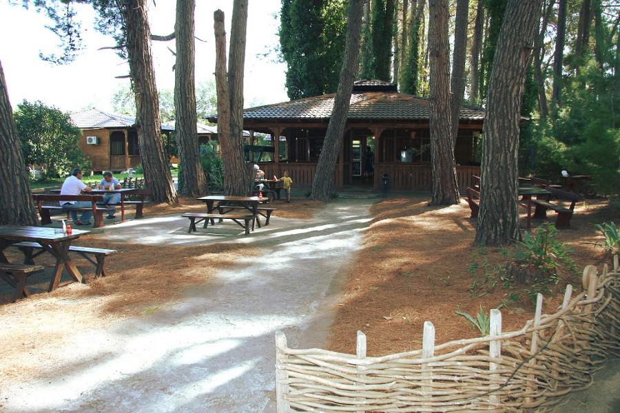 Кафе на территории пансионата Сосновая роща