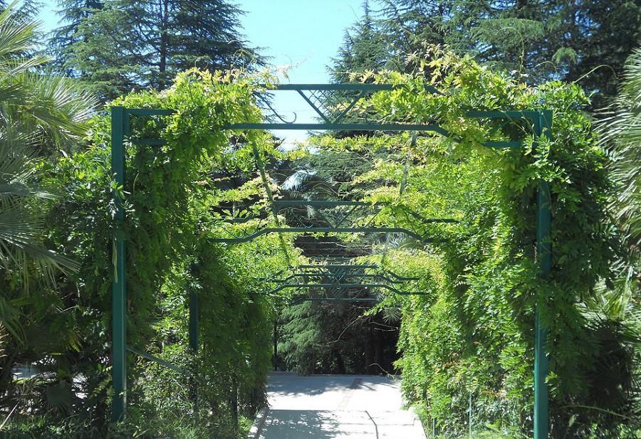 Территория санатория Зеленая роща, Сочи